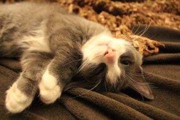 sleeping-cat-1668521_1920
